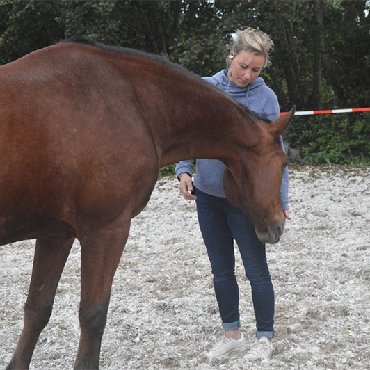 paardencoaching4kant